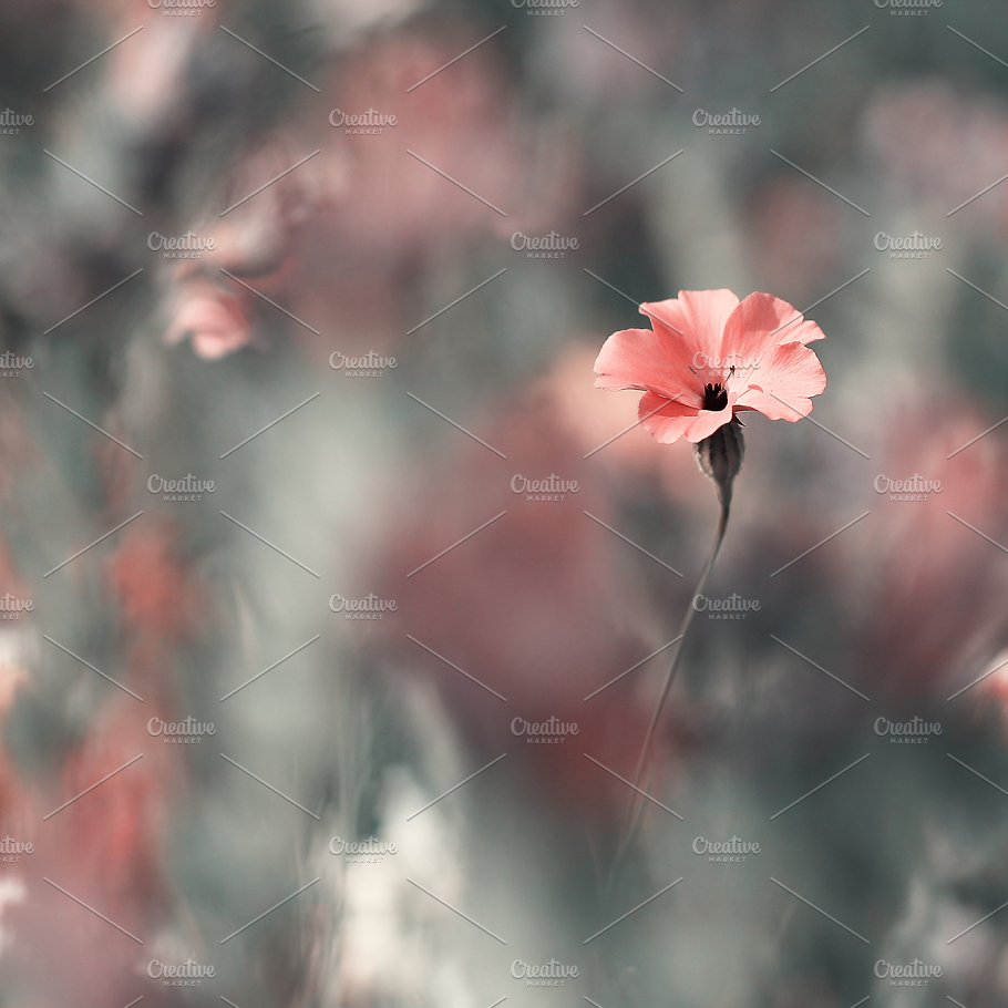 Pink Soft Meadow Flower On Vintage Nature Background Nature Photos