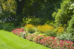 Colorful Perennial Garden Border