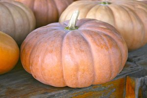 Heirloom Cheese Pumpkin