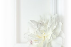 Beautyful white wedding peony