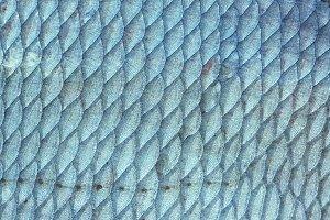 Bream (Abramis Brama) fish scales