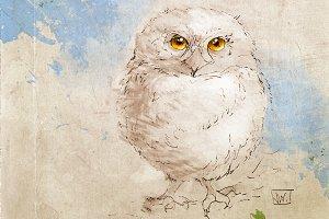 Baby Owl Wildlife Illustration