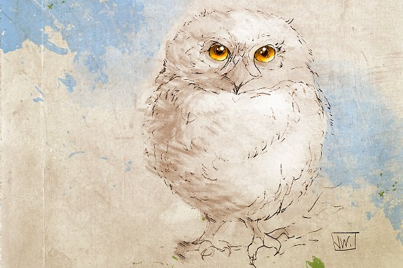 Baby Owl Wildlife Illustration