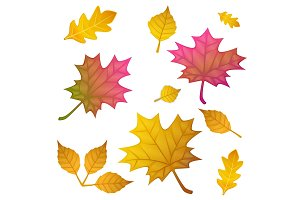 autumn leaves set, isolated on white background. flat style, vector illustration.