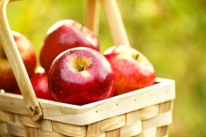 Fresh red apples in basket on grass