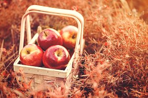 Fresh red apples in basket autumn