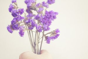 Hand hold the statice flowers