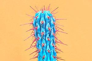 Cactus. Art Gallery Fashion Design. Minimal
