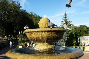 Birds doves pigeons taking a bath in park fountain photo