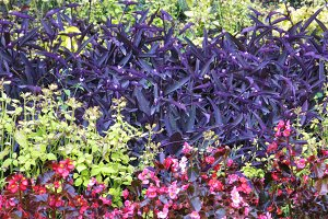 Colorful flowerbed garden plant natural background photo