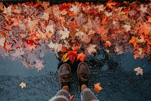 Autumn Fall Leaves on a Rainy Day