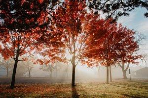 Morning Fog at the Park Fall