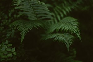 forest cold green fern