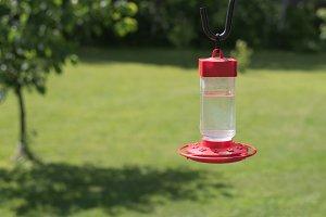 Hummingbird Feeder Hanging on Hook