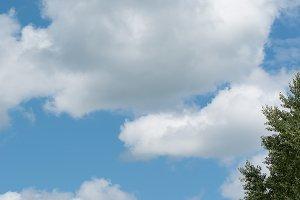 Aspen Tree and Cloudy Blue Sky