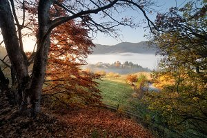 Window to autumn nature