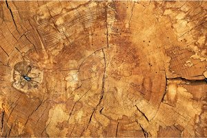 Abstract natural wooden texture background