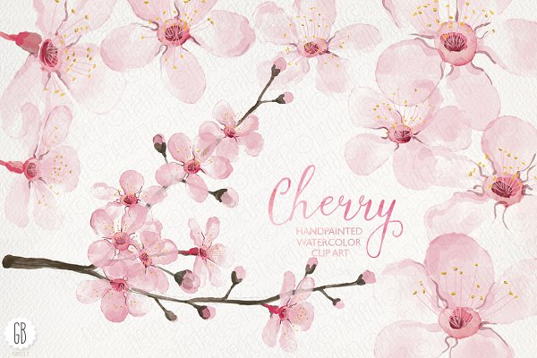Watercolor cherry blossom, spring