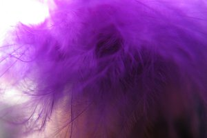 Violet bird feathers decoration background macro photo