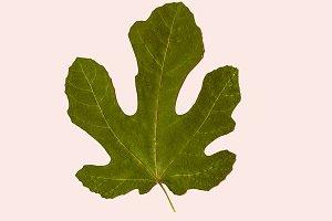 Autumn Leaves Herbarium Minimal art