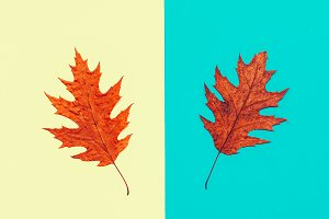 Autumn Leaves Herbarium Minimal art