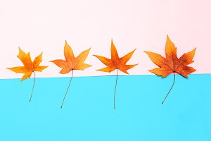 Set Leaf Autumn season Minimal art