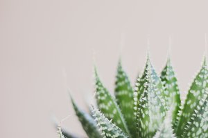 Simple Succulent