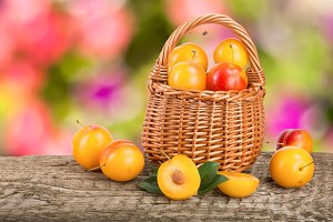 Yellow plums in a wicker basket on a wooden table with a blurry garden background