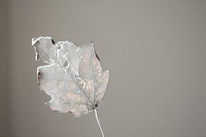 found leaf