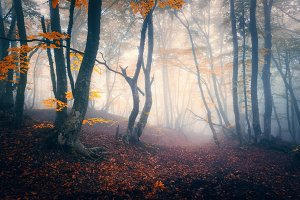Autumn forest in blue fog. Mystical autumn trees with trail in m