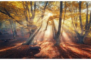 Autumn forest with sun rays in the evening