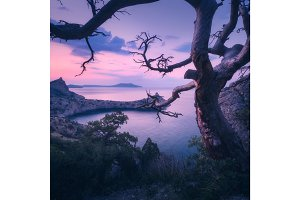 Amazing old tree in crimean mountains at sunrise