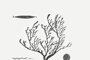 Underwater fish and coral vector