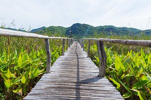 Wooden bridge and scenery