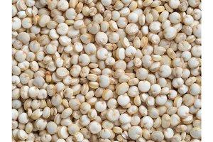 Grain of quinoa