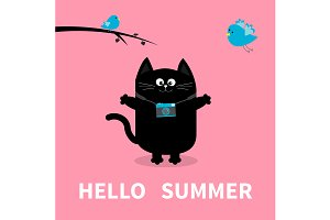 Hello summer. Cat, birds, camera