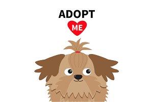 Shih Tzu Dog face Adopt me