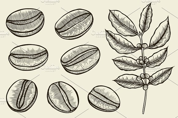 Coffee Branch Plant