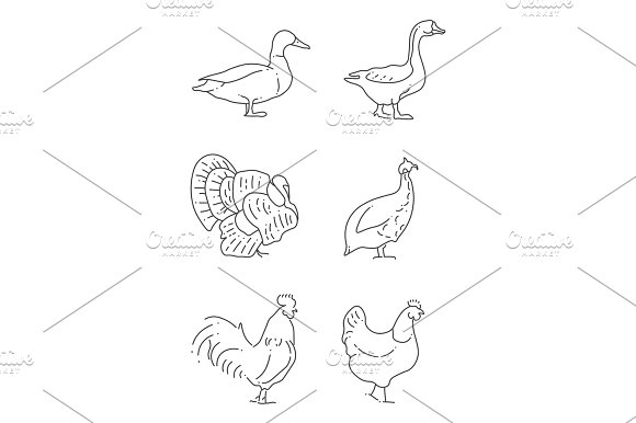 Popular Farm Birds Thin Line Icons