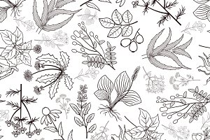 Herb plants seamless pattern