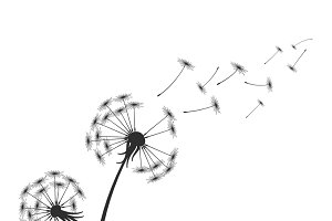 Black dandelion silhouette