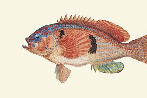 Drawing of a fish