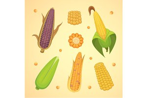 Organic Corn vector set.