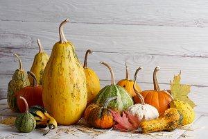 Various halloween pumpkins