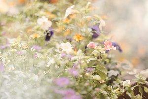 Summer blossom on blured background