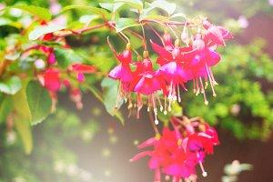 Summer blossom on blured background. Toned image