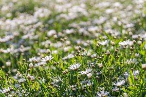 Flowers grass