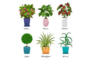 Cartoon houseplants in pots