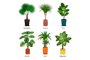 Decorative indoor palm trees in pots