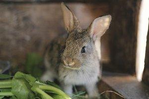 Gray rabbit in rabbit barn - close up